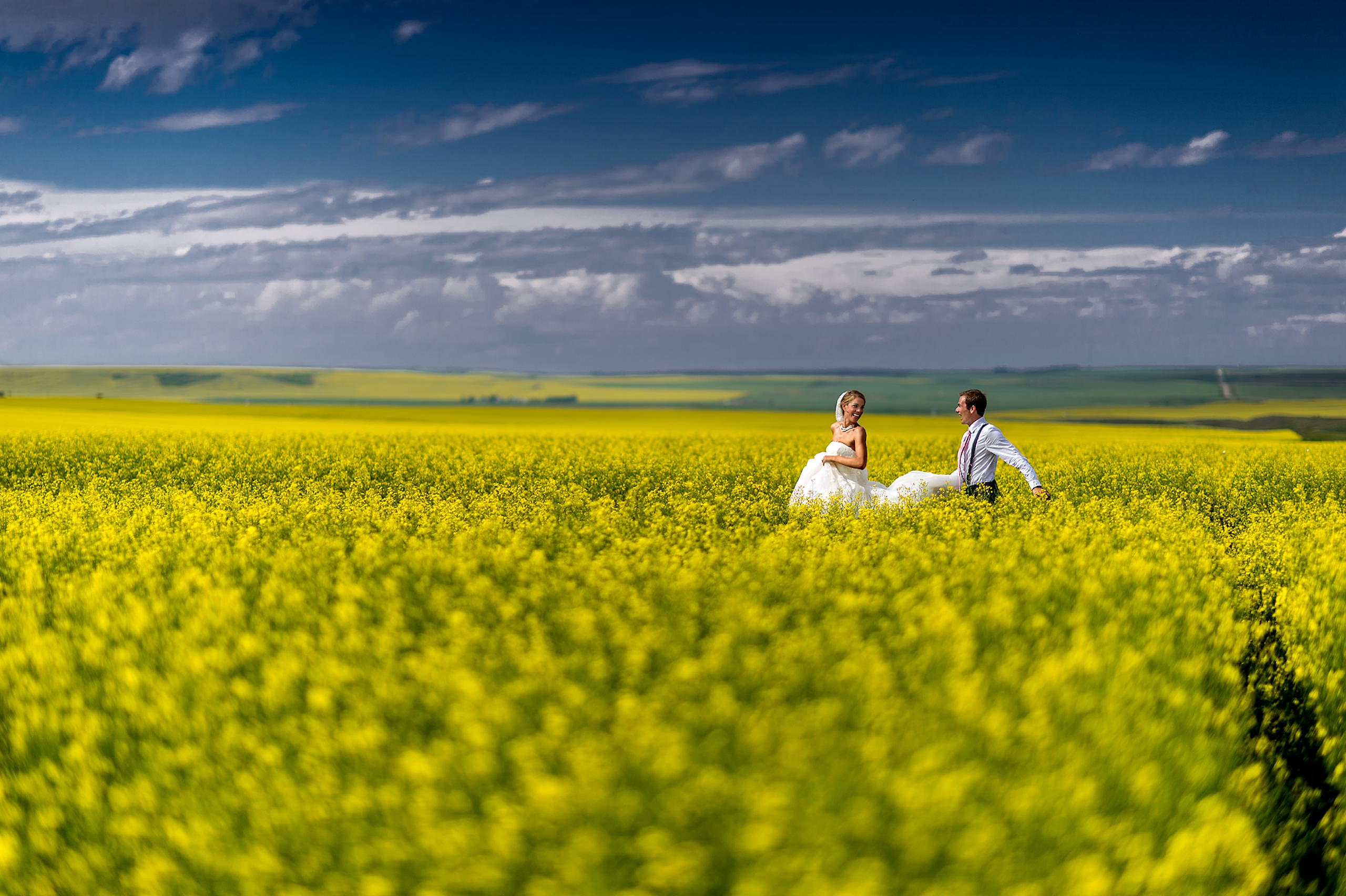 a bride and groom running in a canola field in Alberta by calgary wedding photographers