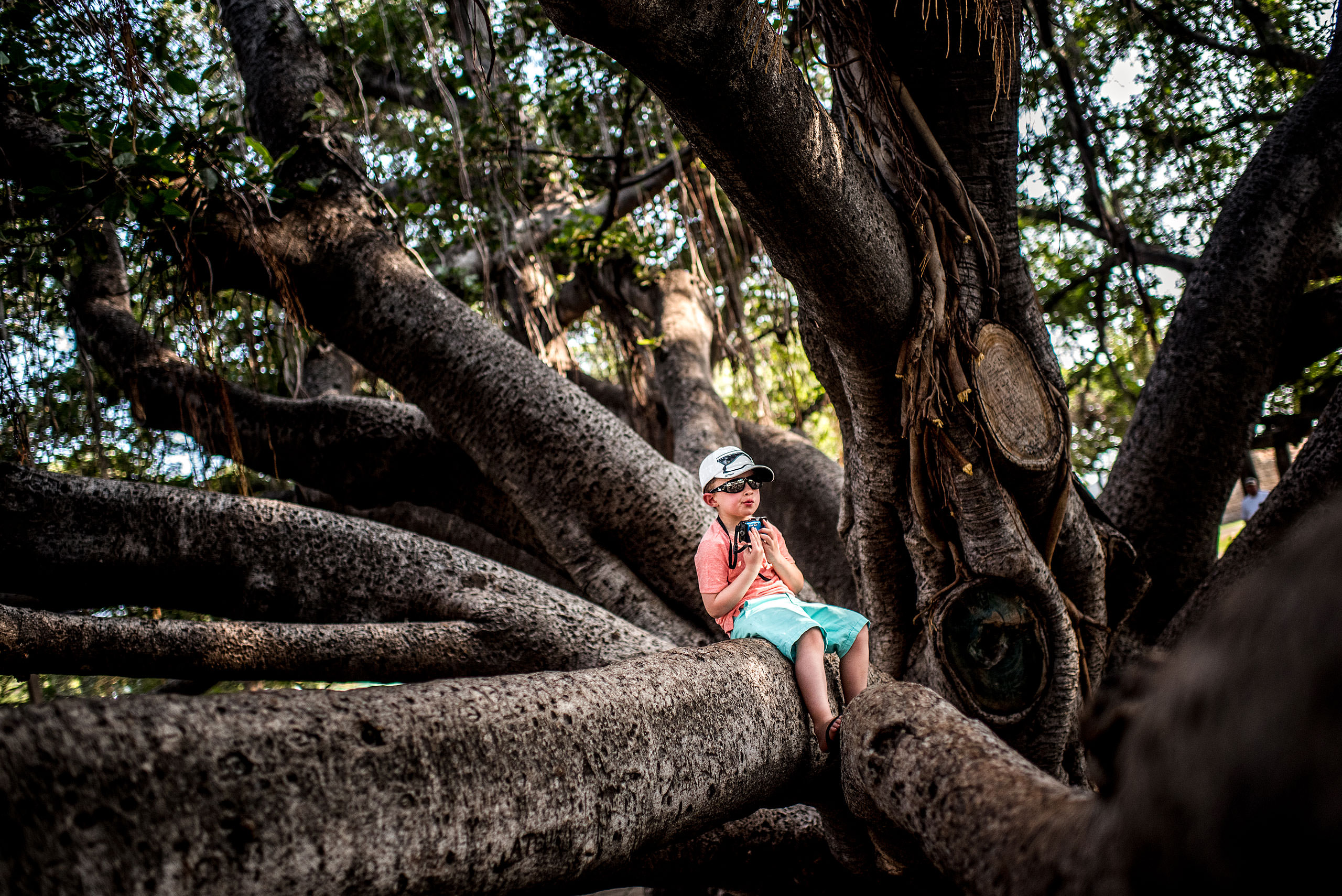 a young boy sitting in a big tree holding his camera by destination family photographers sean leblanc