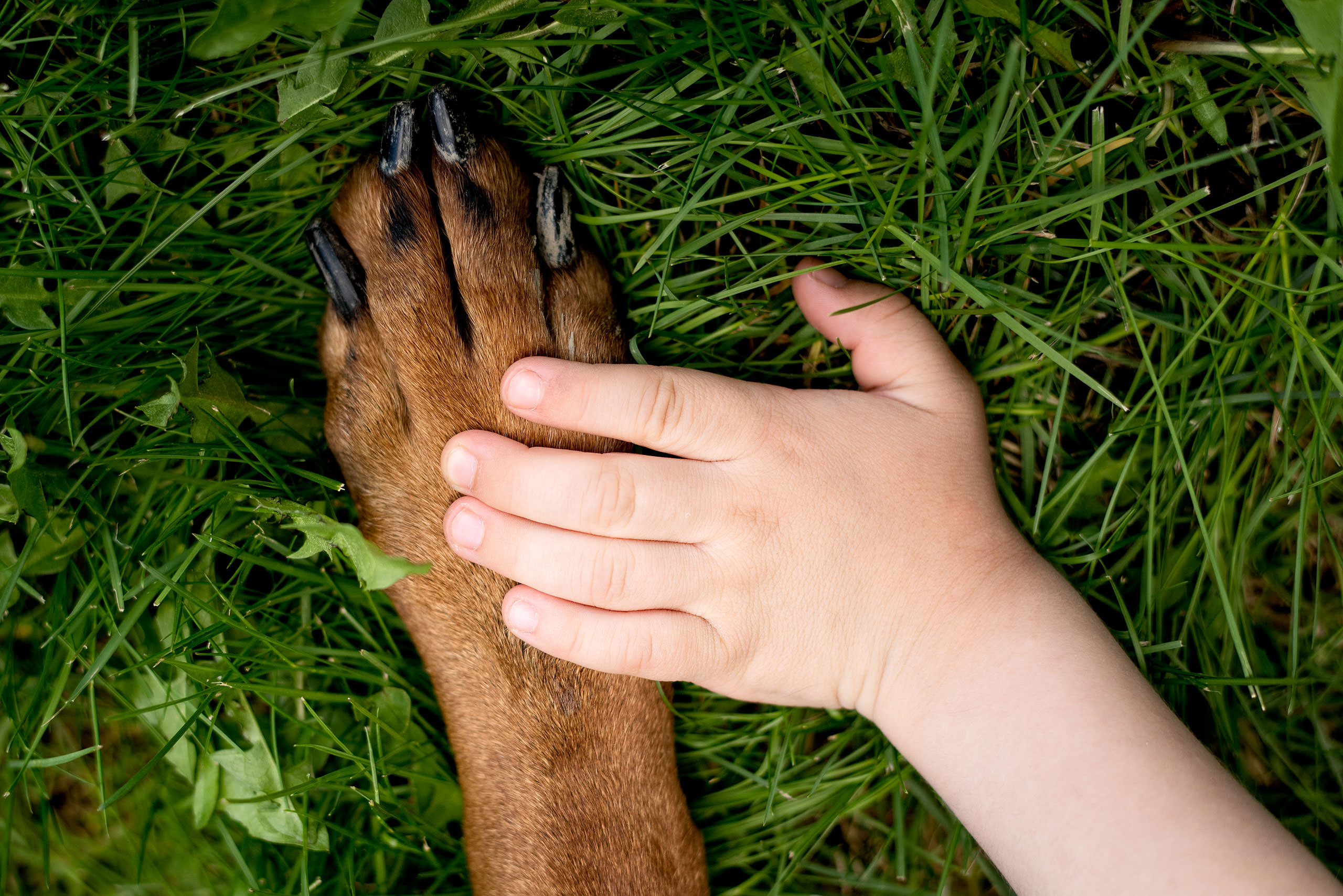 a young boys hand on top of a dogs hand on grass by Red Deer Family Photographer Sean LeBlanc