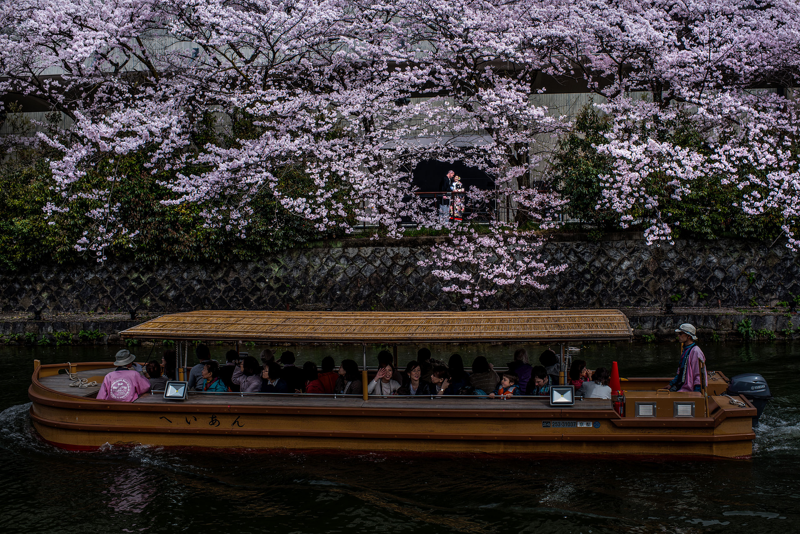 Japanese bride and groom standing in front of a cherry blossom tree by a river by Japan Destination Wedding Photographer Sean LeBlanc