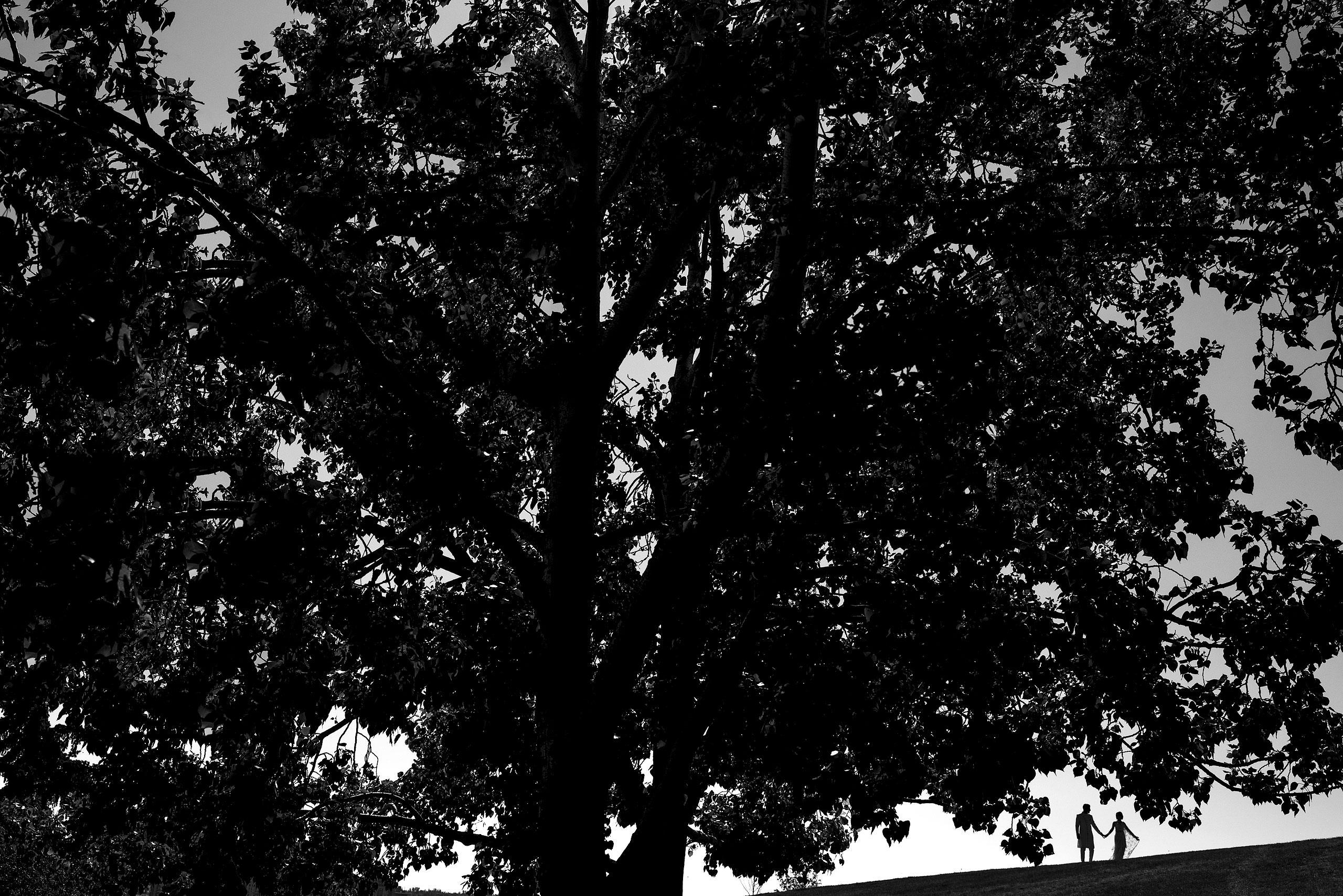 a bride and groom as a silhouette under a big tree by Calgary Banff Wedding Photographer Sean LeBlanc