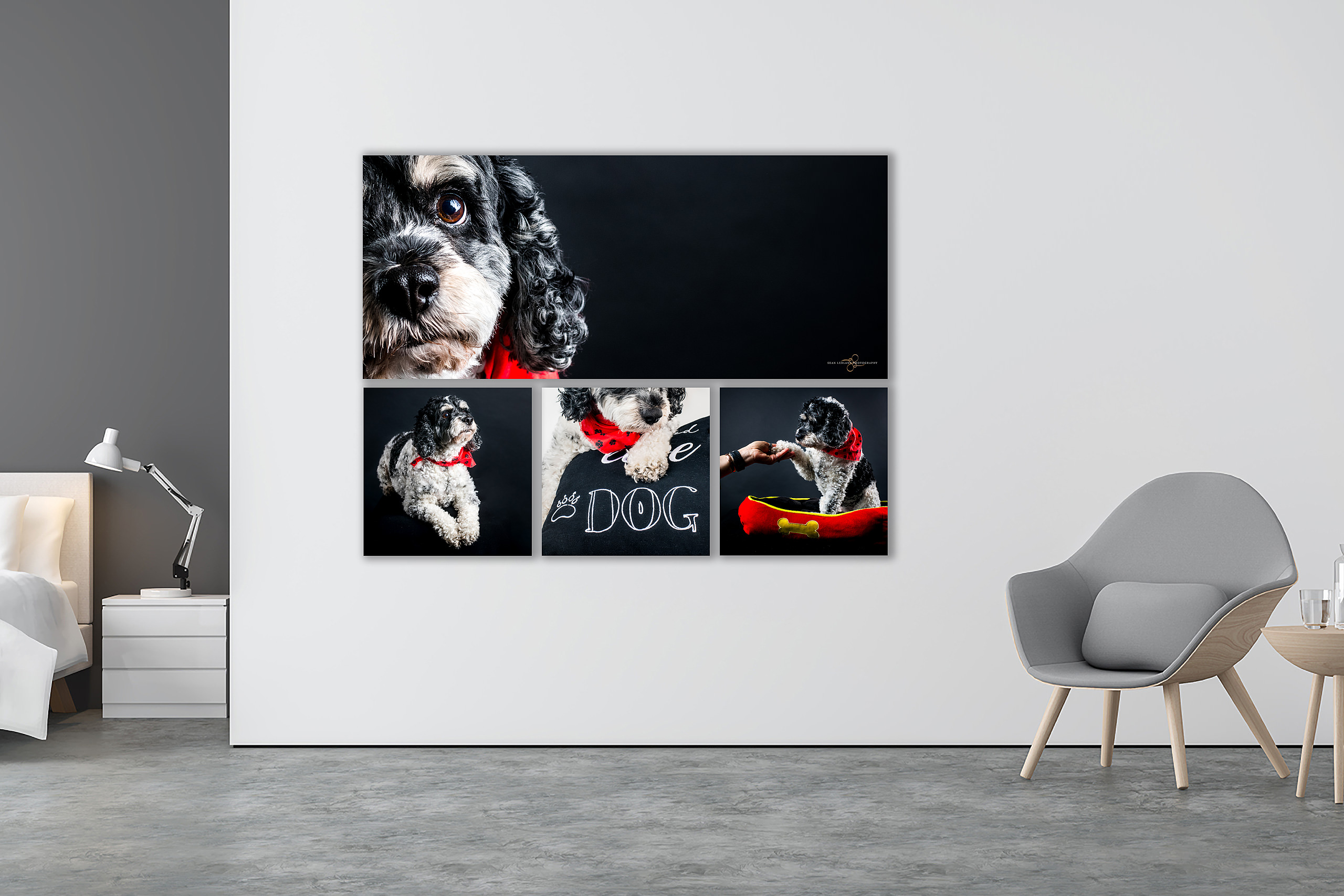 luxury wall art by pet photographer sean leblanc