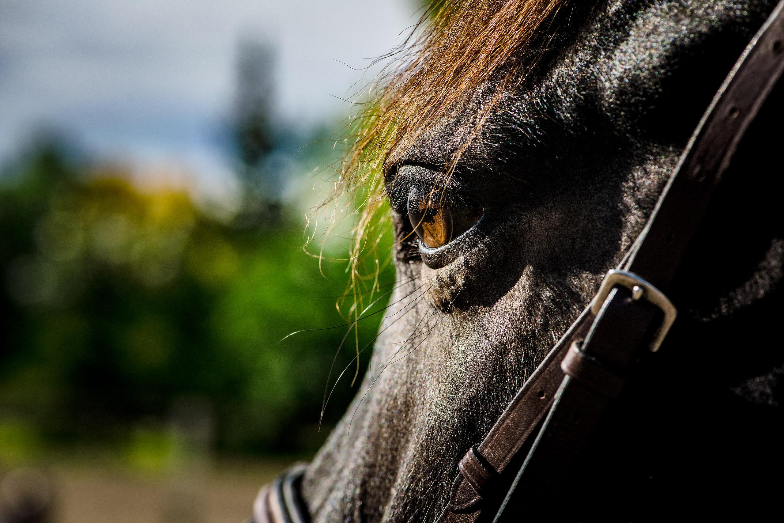 the eye of a dark brown horse by portrait photographer sean leblanc