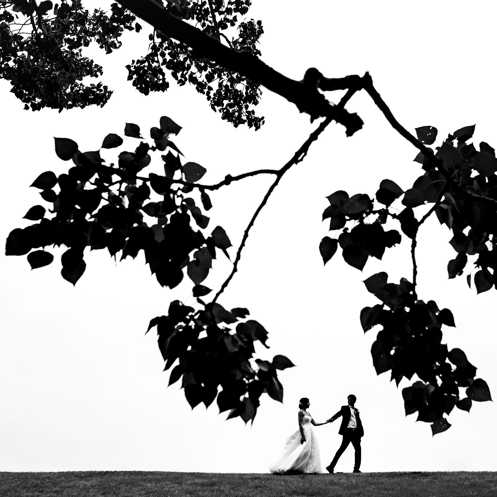 a bride and groom walking along a hill top by a tree by calgary wedding photographer sean leblanc